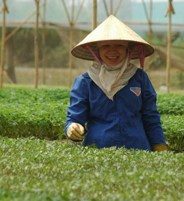 Sowing a bright future for economic development and women's empowerment in Son La province, Vietnam through high-quality seedlings and greenhouse vegetables