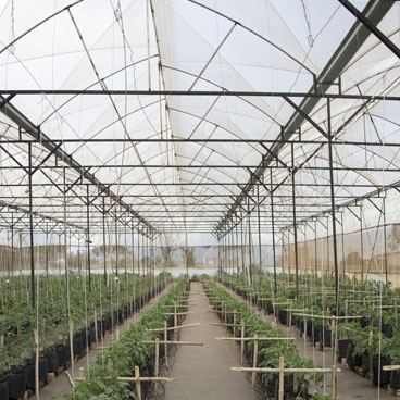 Accelerating a modern greenhouse vegetable production sector in Vietnam