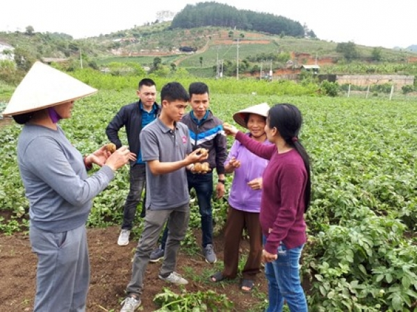 Agrico's potato varieties showing strong performance in Vietnam